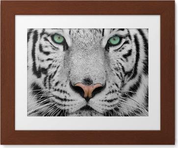 Gerahmtes Bild Weiße tiger