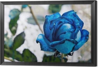 Gerahmtes Leinwandbild Blaue Rose