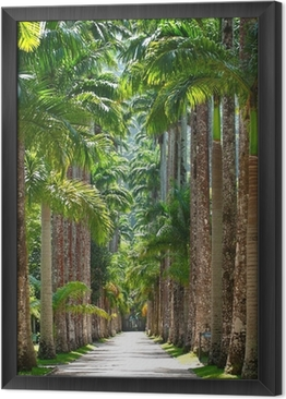 Gerahmtes Leinwandbild Botanischer Garten. Rio de Janeiro