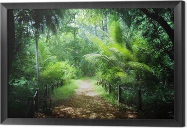 Gerahmtes Leinwandbild Dschungel auf den Seychellen