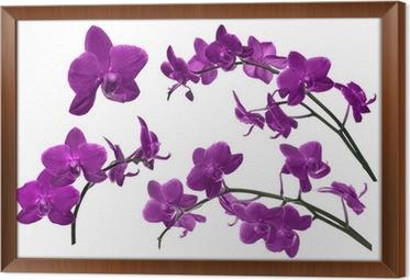 Charmant Leinwandbild Dunkellila Sammlung Orchideenblüten Isoliert Auf Weiß U2022  Pixers®   Wir Leben, Um Zu Verändern