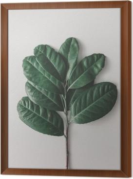 Gerahmtes Leinwandbild Kreative minimale Anordnung der Blätter auf hellem weißem Hintergrund. flach liegen. Naturkonzept.