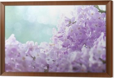 Gerahmtes Leinwandbild Lila Blumen Makro Hintergrund