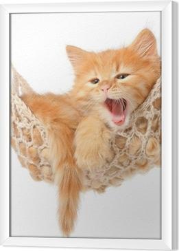 Gerahmtes Leinwandbild Nette rothaarige Kätzchen in der Hängematte
