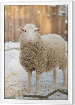 Gerahmtes Leinwandbild Schaf