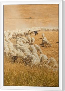 Gerahmtes Leinwandbild Schafherde in einem Feld in der Toskana