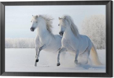 Gerahmtes Leinwandbild Zwei weiße Pferde, die im Schnee galoppieren
