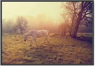 Gerahmtes Poster Schönes weißes Pferd