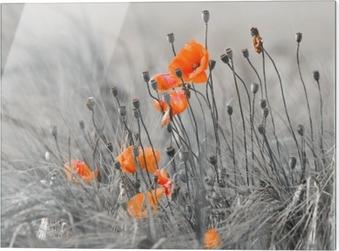 Glasbild Mohnblumen mit grauem Hintergrund
