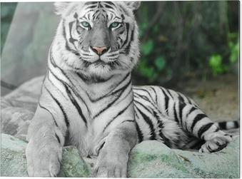 Glasbild WHITE TIGER auf einem Felsen im Zoo