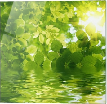 Glass print Green leaves with sun ray