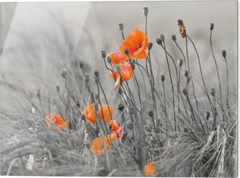Glass print Poppies against a gray background