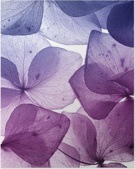 HD Poster Bunten Blütenblatt closeup