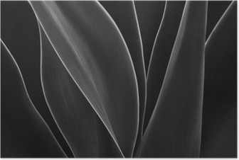 HD Poster Tanzen Agave