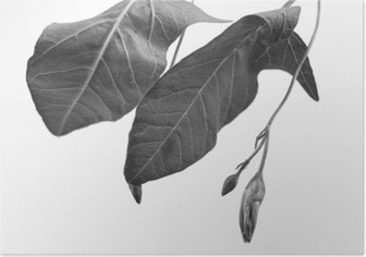 HD Poster Alan derinliği ile bitki nesnenin Siyah ve beyaz Makro çekim