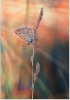 HD Poster Kelebek
