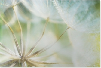 HD Poster Soyut karahindiba çiçek detay arka plan, yumuşak f çekim