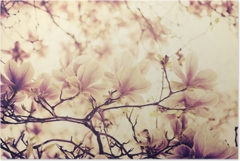 HD Poster Magnolia