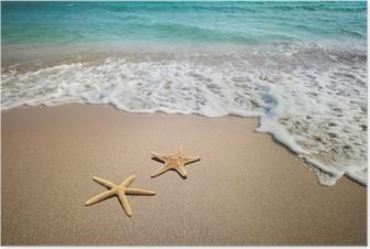 HD Poster Två sjöstjärna på en strand