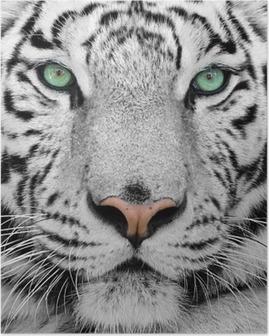 HD Poster Witte tijger