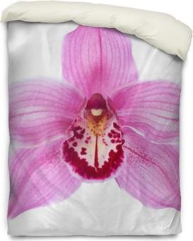 Housse de couette Gros plan de fleur d'orchidée rose (cymbidium) isolé sur fond blanc.