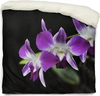 Housse de couette Orchidées roses à la floraison avec fond noir uni.thailand