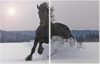 İki Parçalı Kar üzerinde Frizce at
