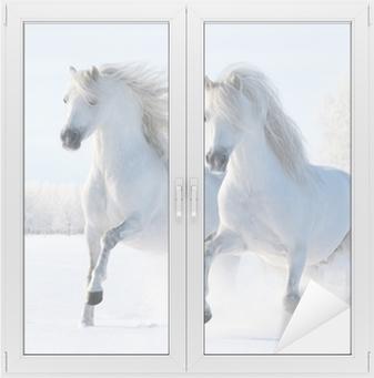 Kaksi valkoista hevosta laukkaa lumikentillä Ikkuna- Ja Lasitarra