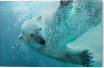 Impressão em Acrílico Polar bear underwater attack
