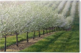 Impressão em Acrílico Pomar de floração