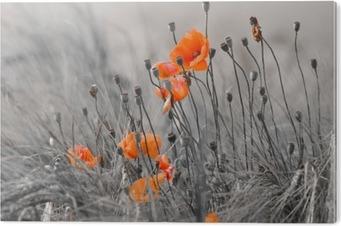 Impressão em Acrílico poppies