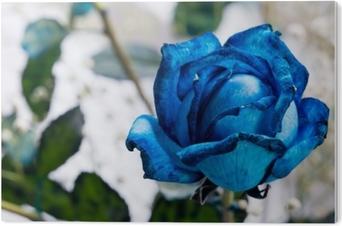 Impressão em Acrílico Rosa Azul