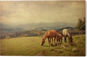 Impressão em PVC Dois cavalos e potros no prado. textura de papel.