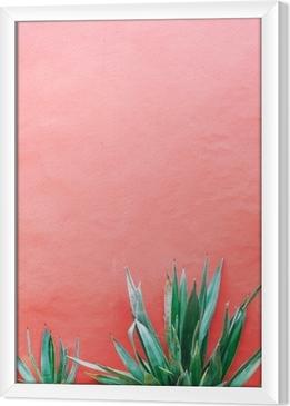 Planter på pink koncept. aloe på lyserød baggrundsvæg. minimal kunst Indrammet fotolærred
