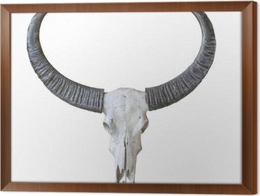 Ingelijst Canvas Buffel schedel geïsoleerd op een witte achtergrond
