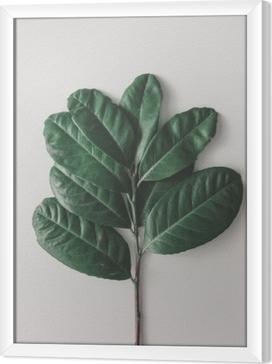 Ingelijst Canvas Creatieve minimale opstelling van bladeren op heldere witte achtergrond. plat leggen. natuur concept.