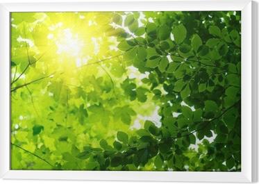 Ingelijst Canvas Groene bladeren met sun ray
