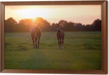 Ingelijst Canvas Moeder paard met veulen op landbouwgrond bij zonsondergang. Geesteren. achter
