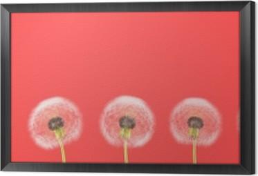 Ingelijst Canvas Paardebloem op kleurrijke achtergrond. 3D-rendering