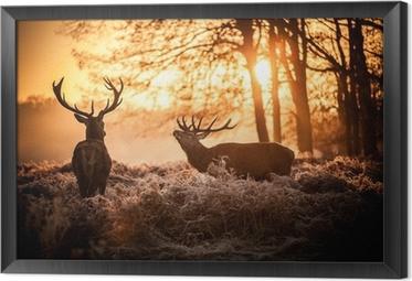 Ingelijst Canvas Red Deer in de ochtend zon.