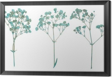 Ingelijst Canvas Set van wilde droge gedrukte bloemen