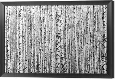 Ingelijst Canvas Voorjaar stammen van berken zwart en wit
