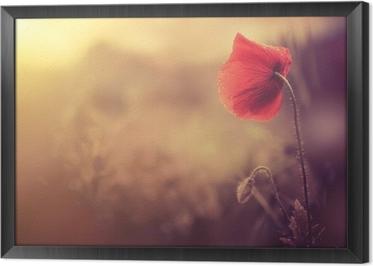 Ingelijst Canvas Wilde papaver bloem