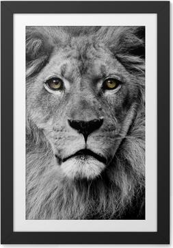 Ingelijste Poster Leeuw ogen