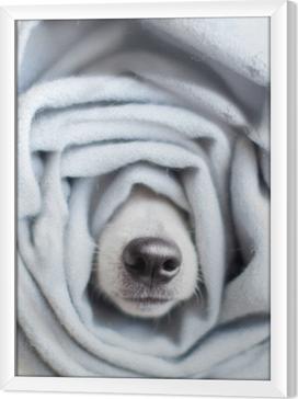 Innrammet lerret Hund innpakket i et skjerf