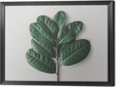 Innrammet lerret Kreativ minimal arrangement av blader på lys hvit bakgrunn. flatt legg. naturkonsept.