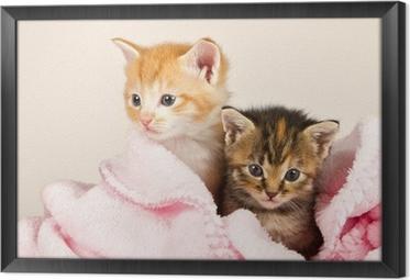 Innrammet lerret To kattunger i et rosa teppe