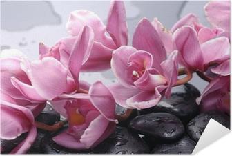 Joukko cattleya orkidea kukka ja kivi vesipisaroita Itsestäänkiinnittyvä Juliste