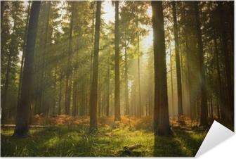 Kaunis metsä Itsestäänkiinnittyvä Juliste