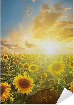 Kesä maisema: kauneus auringonlaskun yli auringonkukan kenttään Itsestäänkiinnittyvä juliste
